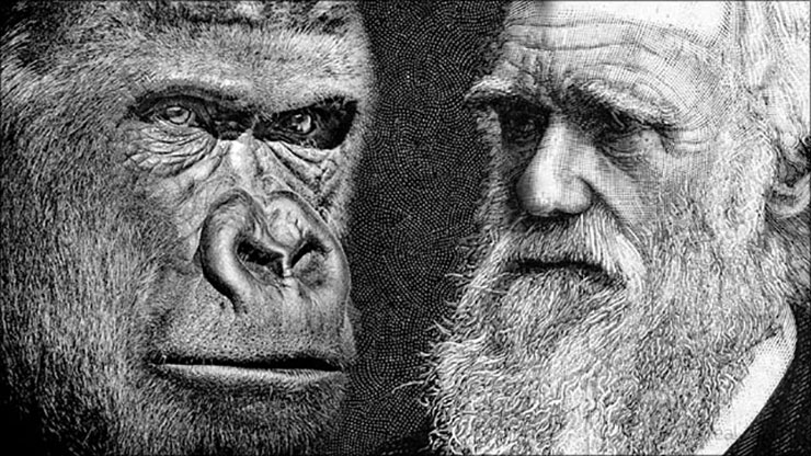 bewijs evolutietheorie darwin