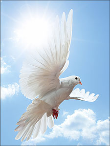 De heilige Geest als een duif