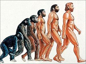 evolutie mens bewijzen