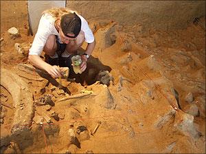 evolutie mens paleontropologie