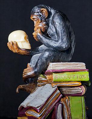 evolutie mens schedel aap