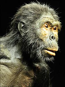 evolutie mens voorouder