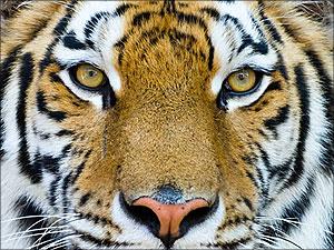 evolutietheorie darwinisme dieren