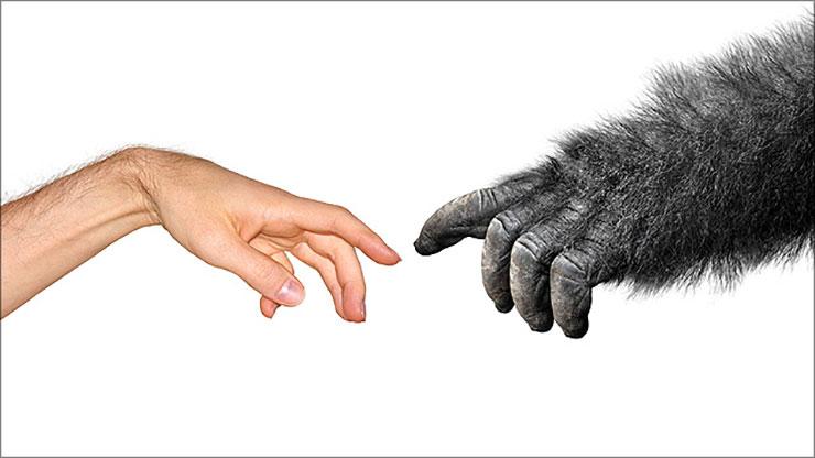 evolutietheorie natuurlijke selectie