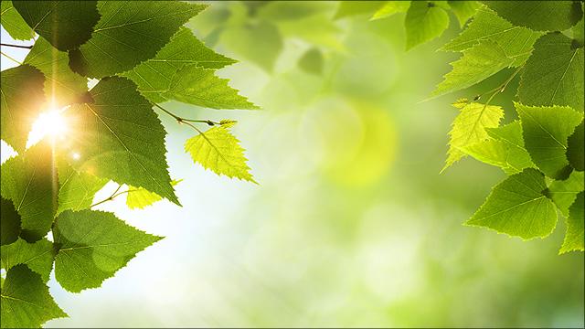 Zon schijnt door groene bladeren