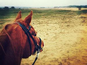 paarden david sorensen