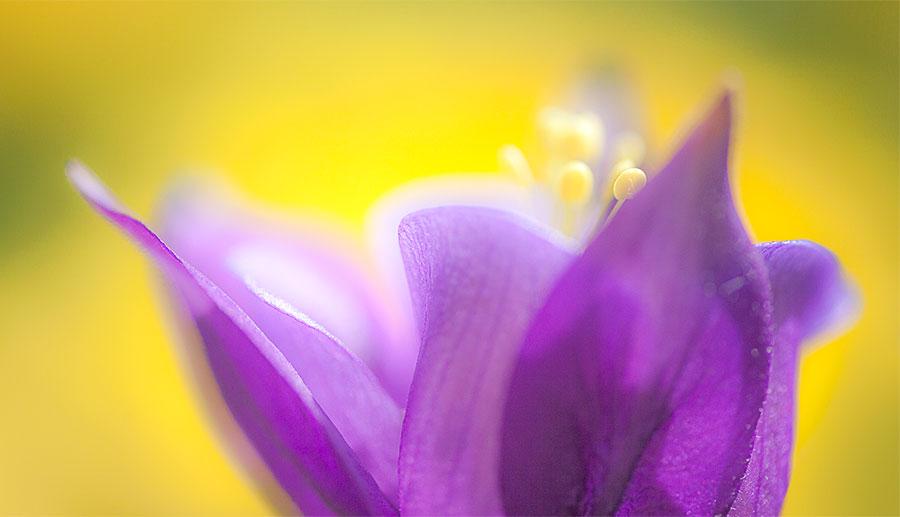 flower-images-abstract-art-closeup