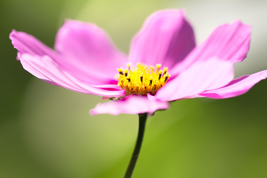 flower-images-purple-blue-yellow