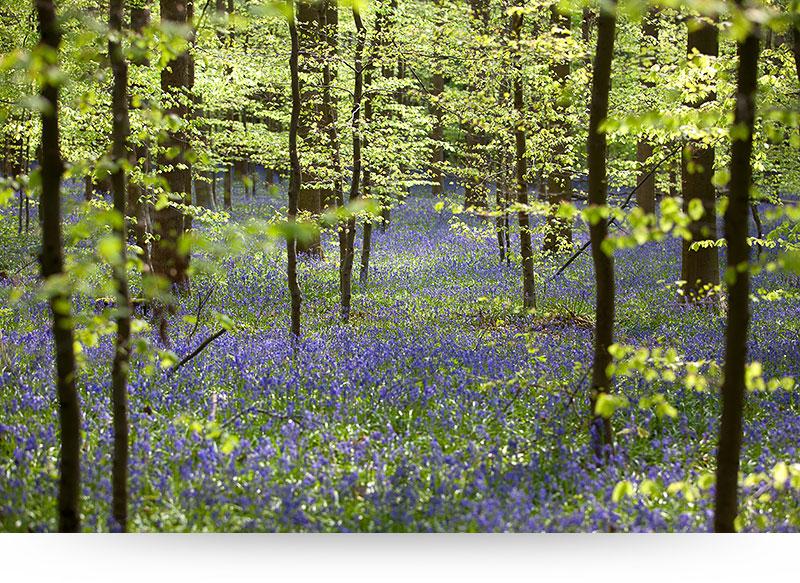 landscape-images-canvas-prints-forest-spring-green-leaves
