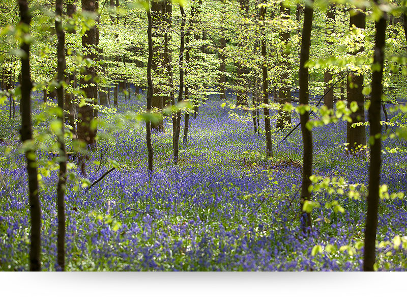 landscape-images-canvas-prints-forest-spring-green-leaves