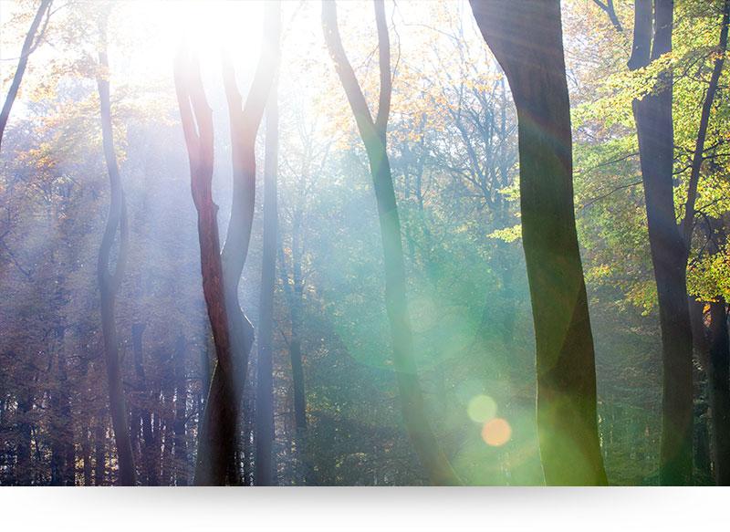 landscape-images-canvas-prints-forest-sunbeams-bokeh
