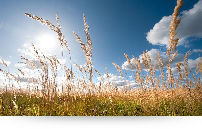 landscape-images-canvas-prints-green-grass-blue-sky-sun
