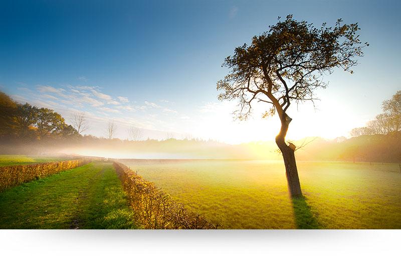 landscape-images-canvas-prints-sunset-meadow-tree