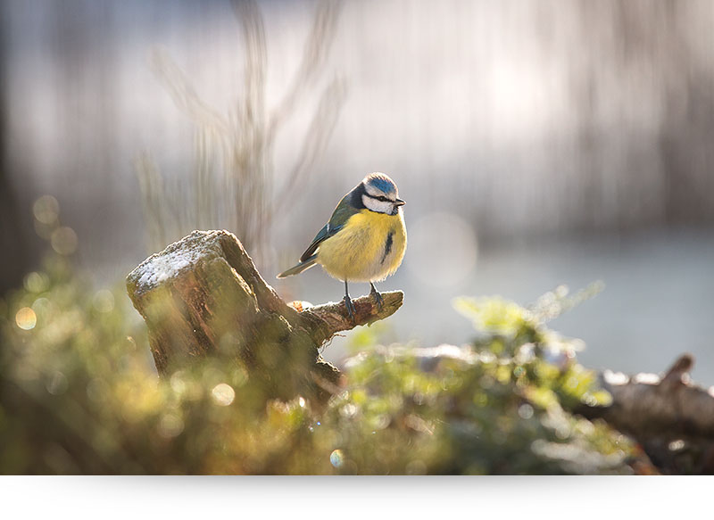 nature-images-prints-bird-winter